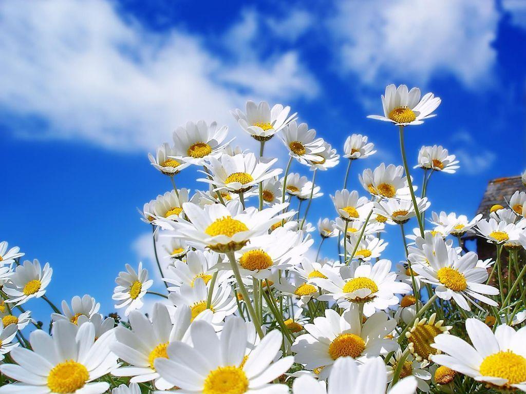 FOTOS MARAVILLOSAS - Página 12 Flores-de-primavera